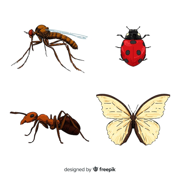 Collezione di insetti colorati disegnati a mano Vettore gratuito