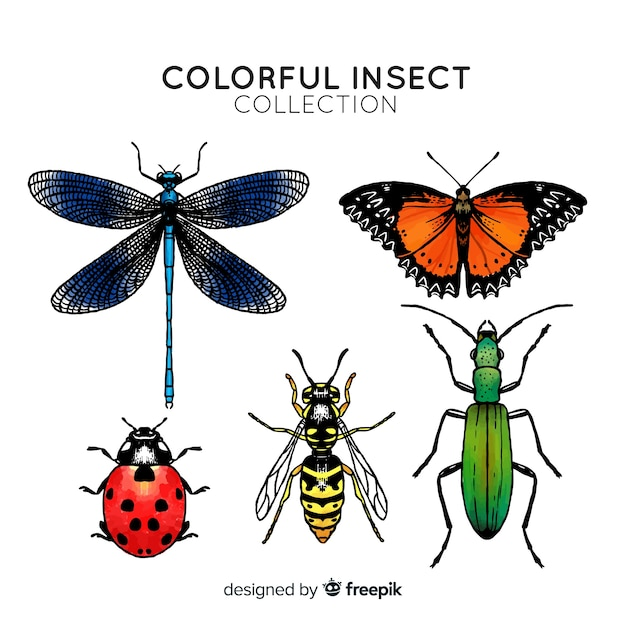 Colorful hand drawn insect collection Free Vector