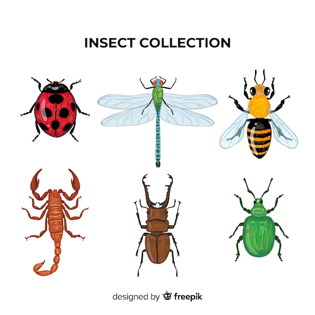 Colorful hand drawn insects pack Free Vector