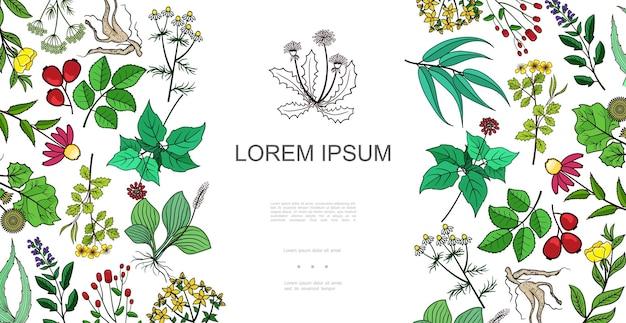 手描きスタイルのイラストで薬草と薬草とカラフルな健康な植物の背景 無料ベクター