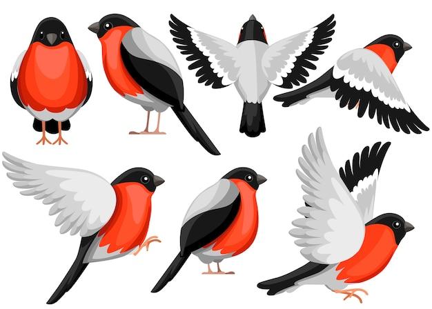 ウソ鳥のカラフルなアイコンセット。キャラクター 。ビューの別の側面にある鳥のアイコン。冬の鳥。白い背景のイラスト。 Premiumベクター