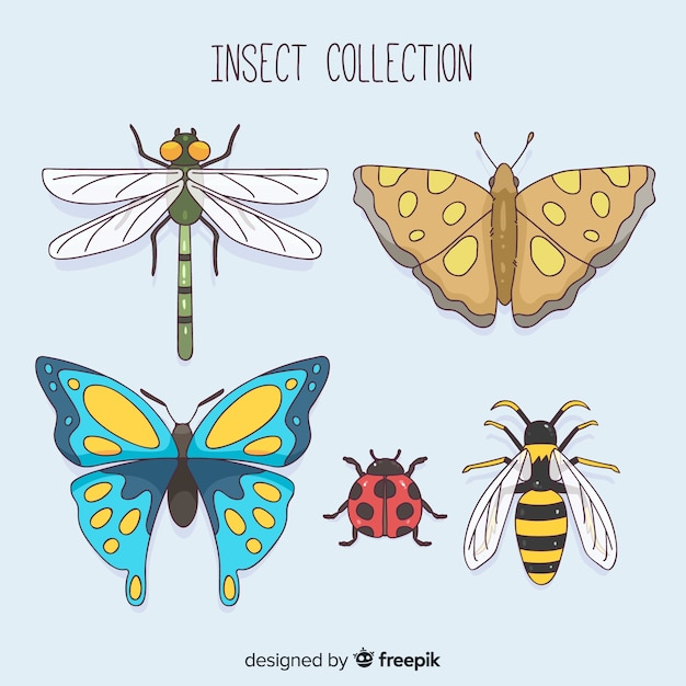 Colorful insect collection Free Vector