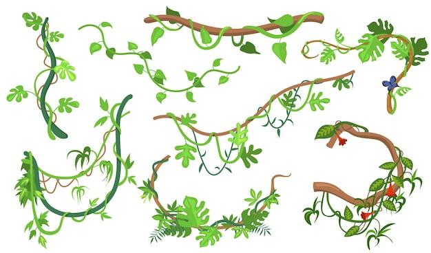 ウェブデザインのためのカラフルなつる植物またはジャングル植物フラットセット。熱帯のブドウの木や木の孤立したベクトルイラストコレクションの漫画登山小枝。熱帯雨林、緑と植生の概念 無料ベクター