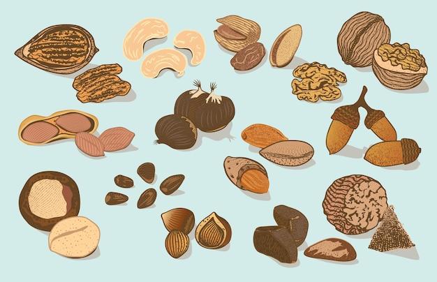 Коллекция красочных натуральных органических орехов Бесплатные векторы