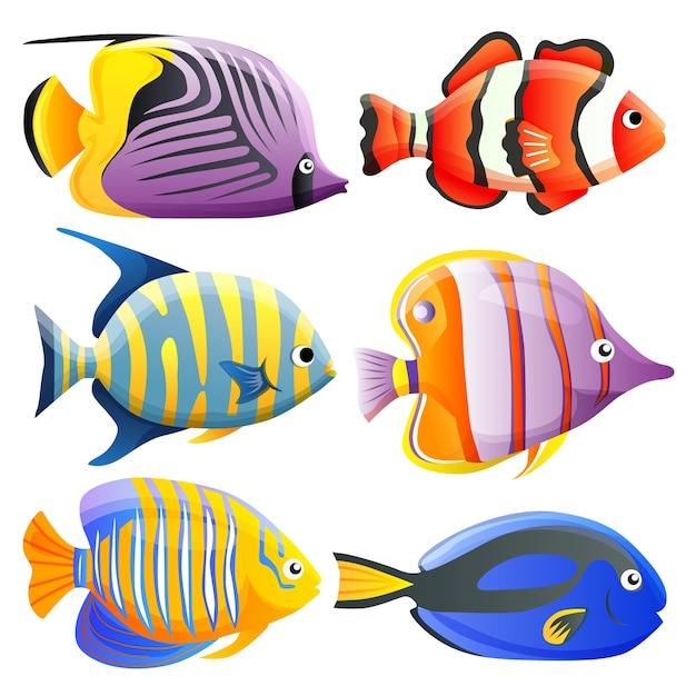 Colorful Fish Free Vectors Stock Photos Psd
