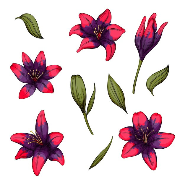 白い背景の上のユリの花のカラフルな、あなたのデザインの咲く花のセット。 Premiumベクター