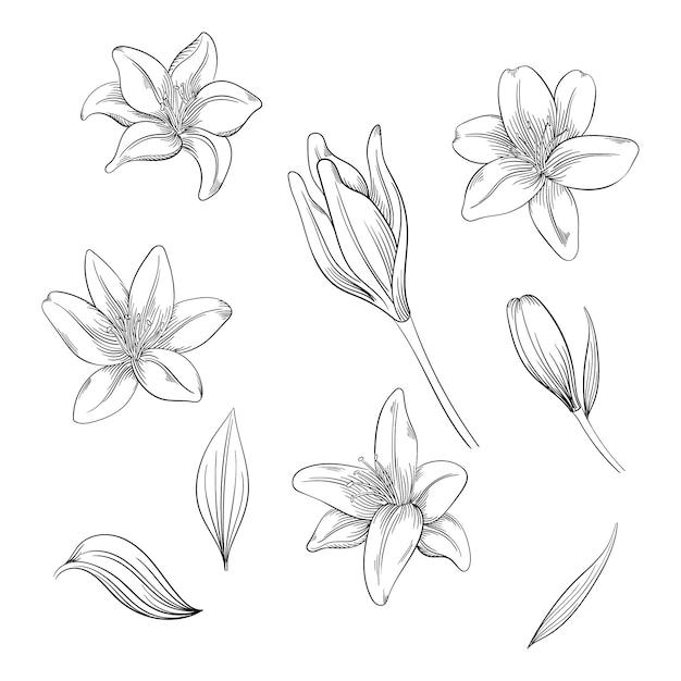 ユリの花のカラフル、あなたのデザインの咲く花のセット。 Premiumベクター