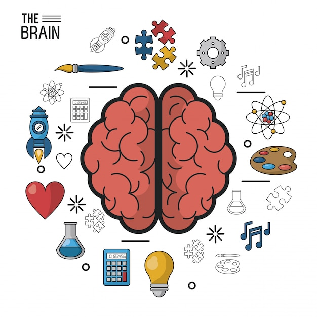Colorful poster the brain in top view of its two hemispheres Premium Vector