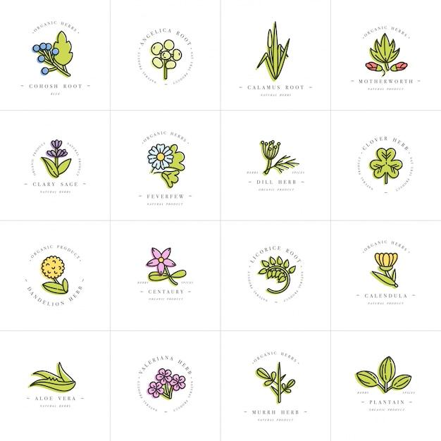 カラフルなセットのデザインテンプレートとエンブレム-健康的なハーブとスパイス。別の薬用、化粧品の植物。トレンディな直線的なスタイルのロゴ。 Premiumベクター
