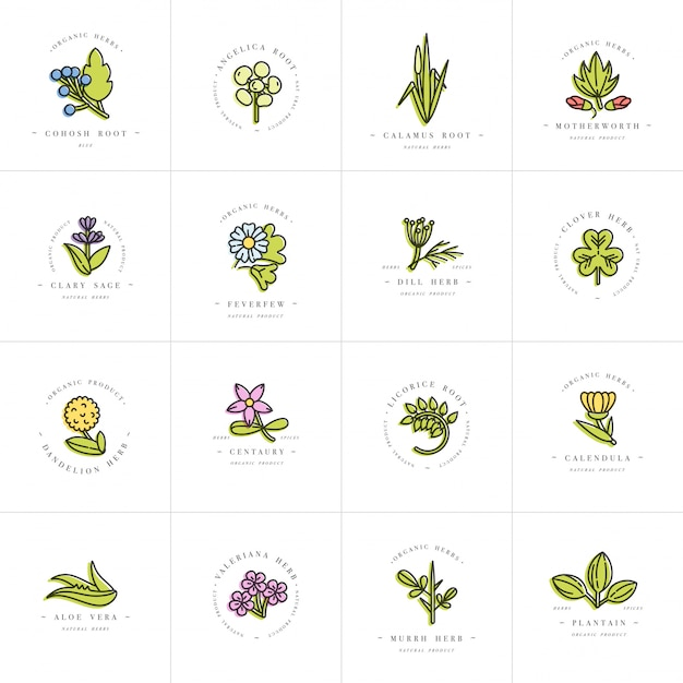 Colorful set design templates and emblems - healthy herbs and spices. different medicinal, cosmetic plants. logos in trendy linear style. Premium Vector