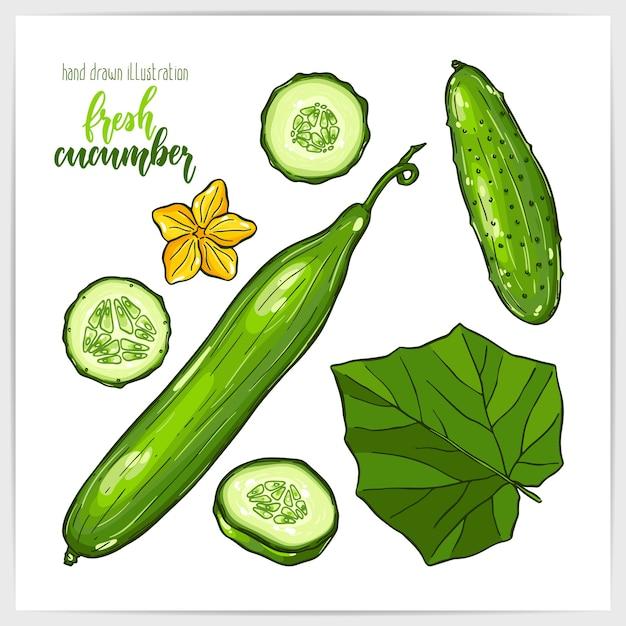 Красочный набор сочных и вкусных огурцов, целых и нарезанных, с листьями. рисованной иллюстрации с заголовком ручной надписи. Premium векторы