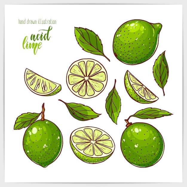 Красочный набор спелых и вкусных лаймов, целых и нарезанных, с листьями. рисованной иллюстрации с заголовком ручной надписи. Premium векторы