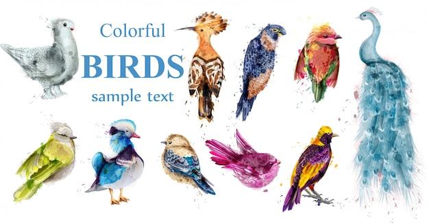 Colorful tropic birds watercolor collection Premium Vector