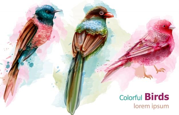 Colorful tropic birds watercolor Premium Vector