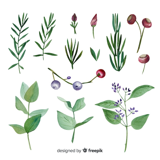 Colorful watercolor floral branch collection Free Vector