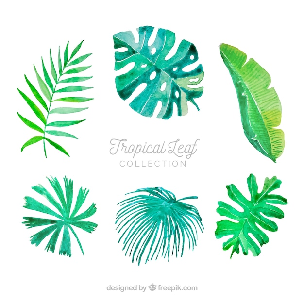 Free Vector Colorful Watercolor Tropical Leaf Collection Download all photos and use them even for commercial projects. colorful watercolor tropical leaf