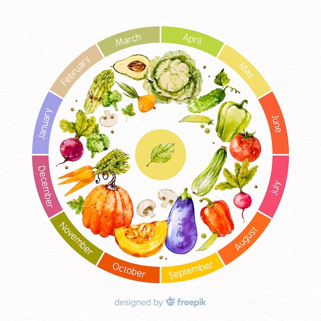 Colorful watercolor wheel of seasonal vegetables and fruits Free Vector