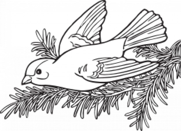 Colouring Book Free Download Software Coloring Willow Goldfinch Vector