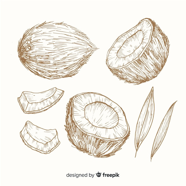 Colorless hand drawn coconut background Free Vector