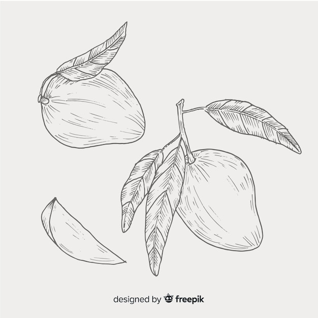 Colorless hand drawn mango background Free Vector
