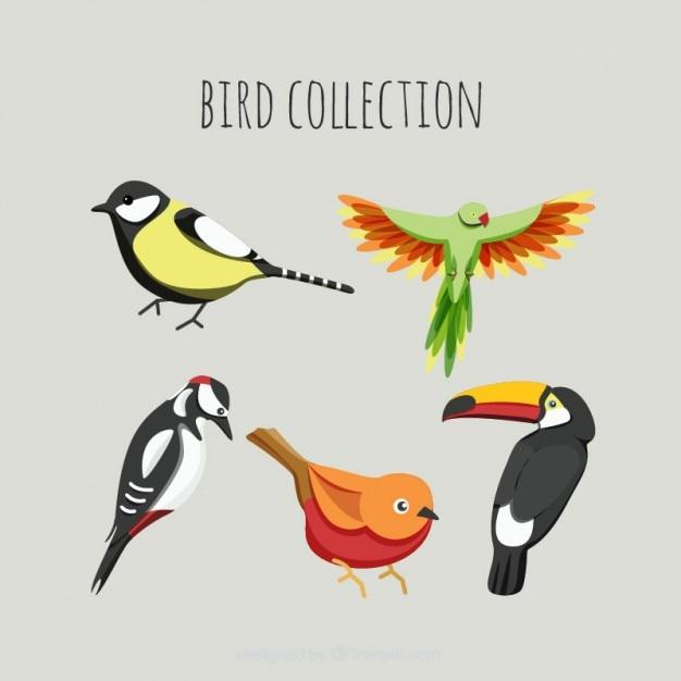 色の鳥パック 無料ベクター