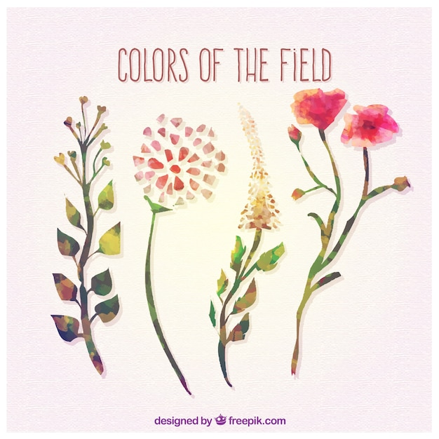Colors of the field Free Vector