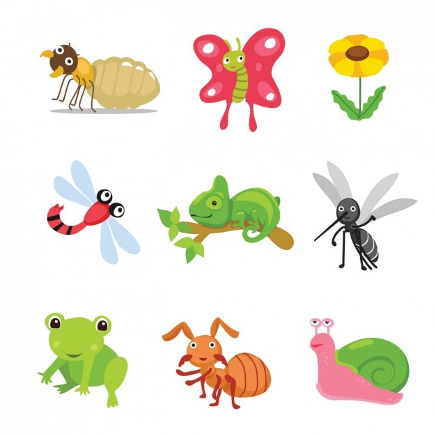 Coloured animals and insects collection Free Vector