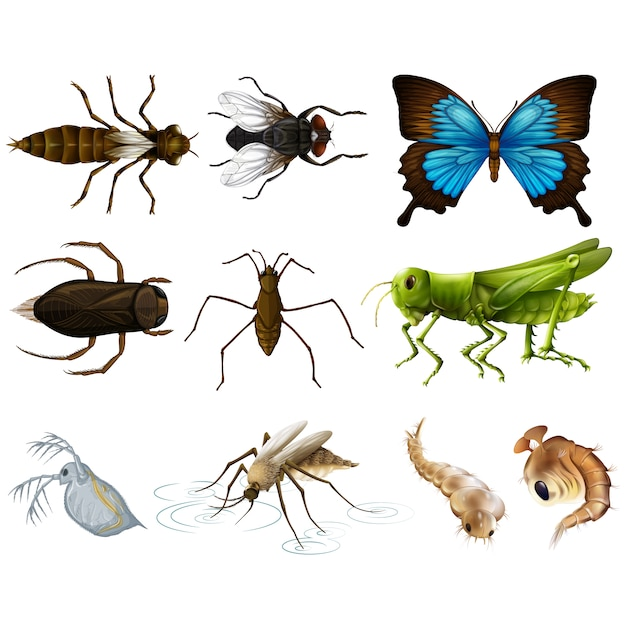 Coloured insects collection Free Vector