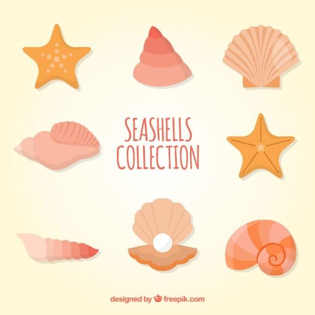 Coloured seashells collection Free Vector