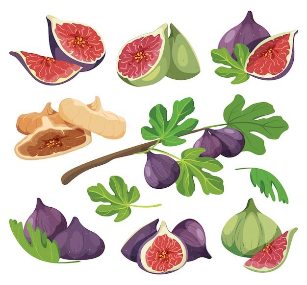 葉を持つ一般的なイチジク。白で隔離されるイチジクの詳細な図面のコレクション。新鮮な干しイチジクフルーツ色のベクトル図のセットです。イチジク製品のパッケージの構成。 Premiumベクター