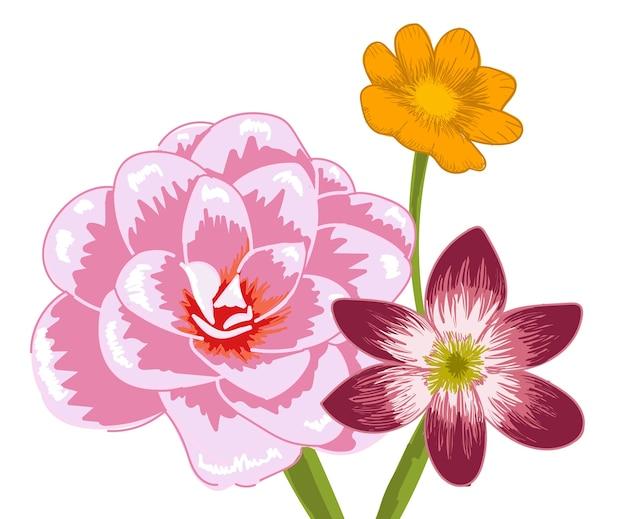 3つの異なる花の組成物。バミューダキンポウゲ、雪の栄光とダマスクローズ 無料ベクター