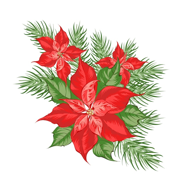 Composition of red poinsettia flower isolated over white . Premium Vector