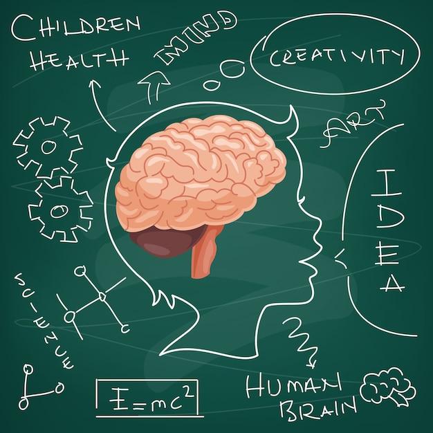 Concept of brain anatomy and creativity Premium Vector