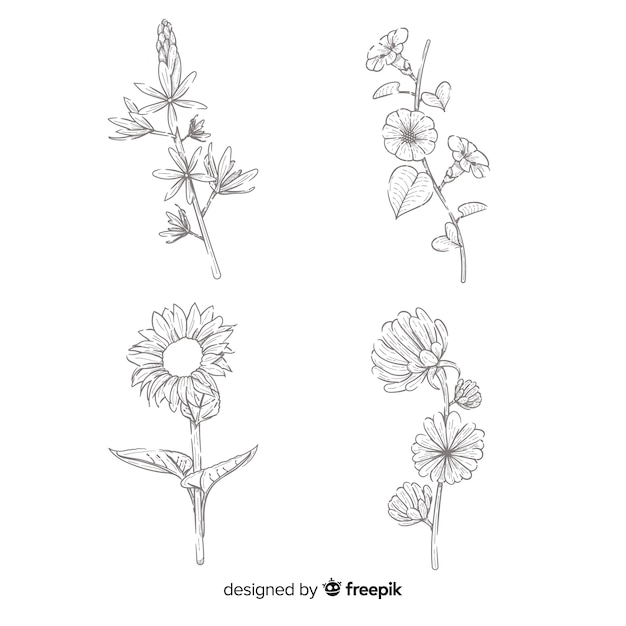 Concept of realistic draw of flower collection Free Vector