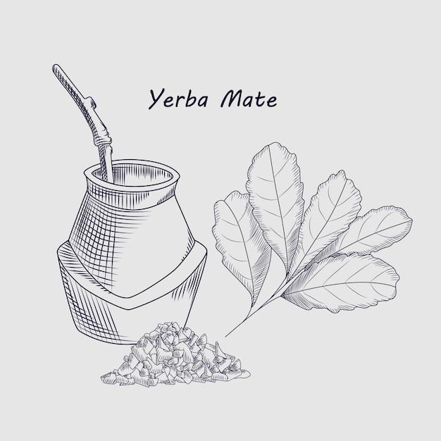 Concept Of Yerba Mate Drink Sketch Drawing Vector Premium