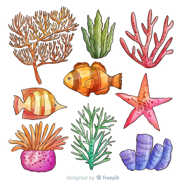 Coral collection Vector | Free Download