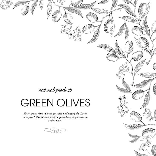 Угловая рамка элегантный свиток орнамент гравировка зеленые оливки грозди границы рисованной каракули иллюстрации карты Бесплатные векторы