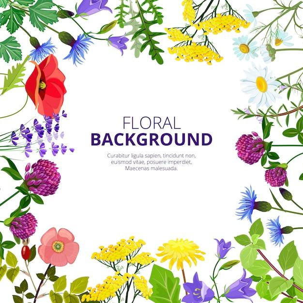 化粧品ハーブ。健康植物の花とハーブティー美容医学蜂蜜製品葉の写真 Premiumベクター