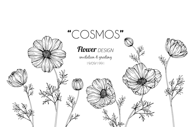 Cosmos flower drawing illustration Premium Vector