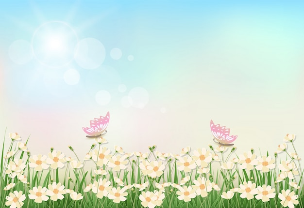 Cosmos flowers spring season Premium Vector