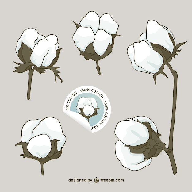 Cotton flowers vector Free Vector