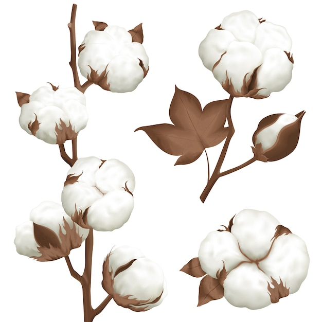 Cotton plant boll realistic set Free Vector