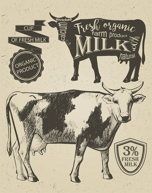 Cow in graphic vintage style, hand drawing vector image. Premium Vector