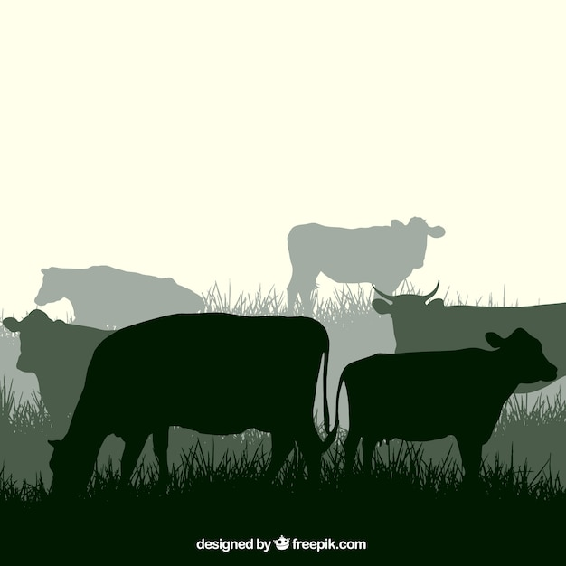 Cow silhouettes Free Vector