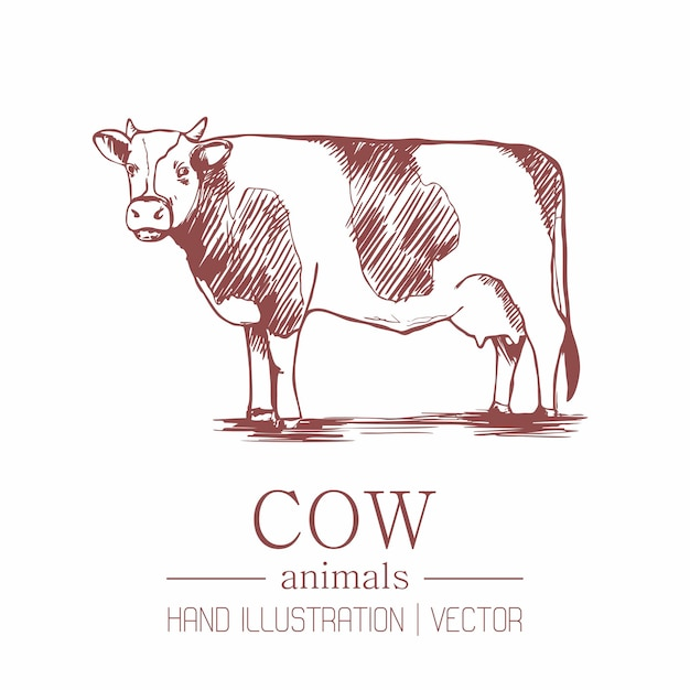 Cow. vintage style. hand drawing. Premium Vector