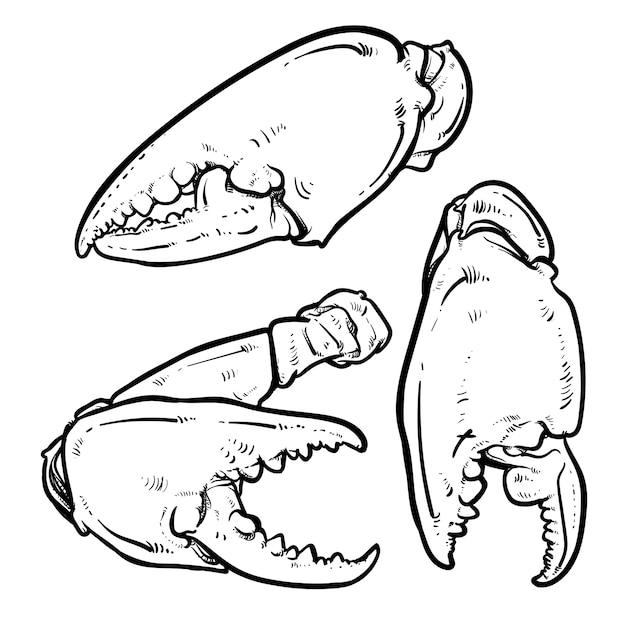 Краб когти, изолированных на белом фоне Premium векторы
