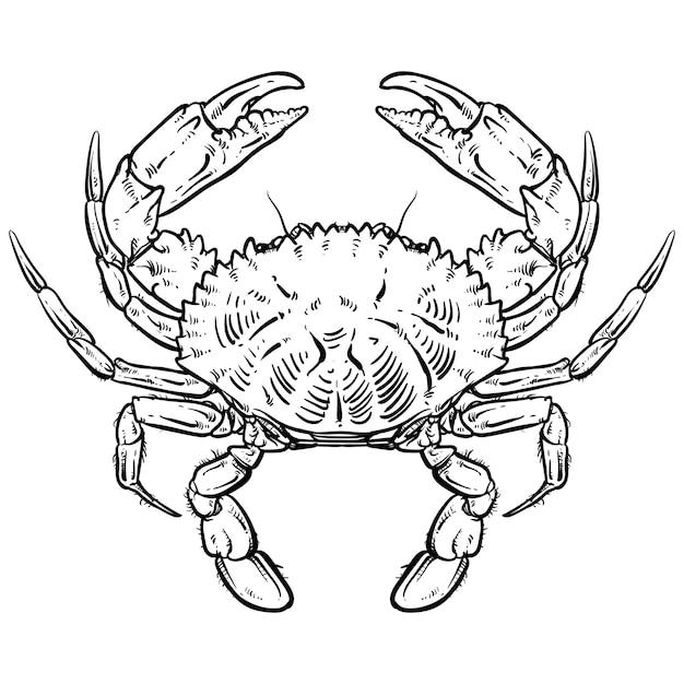 Краб рисунок на белом фоне Premium векторы