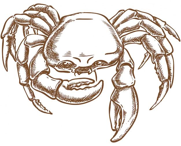 Crab vector sketch hand drawing Premium Vector
