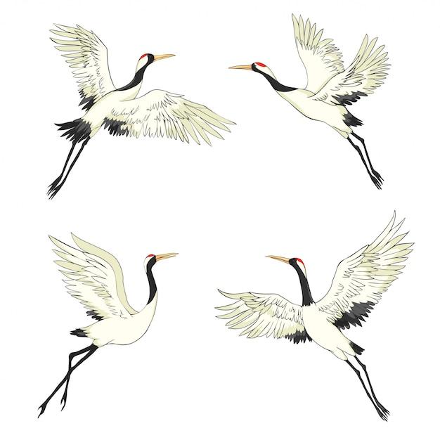 Crane. a bird in flight. design element. vector. Premium Vector