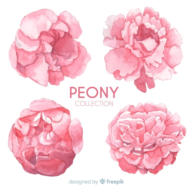 Creative collection of peony flowers Free Vector